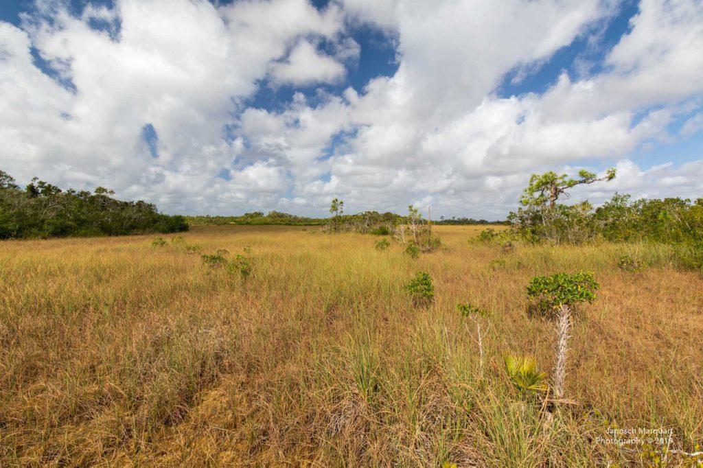 Blick ins Marschland mit einigen Bauminseln.