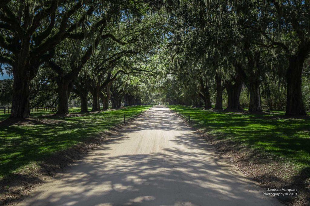 Von Bäumen gesäumte Zufahrt zu der Plantage.